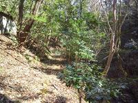 先日の大雨の影響か倒木が何箇所かあり走行不能
